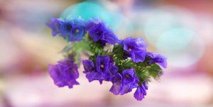 ดอกสแตติสสื่อถึงความทรงจำและความรู้สึกดี ๆ ที่มีต่อผู้ล่วงลับ